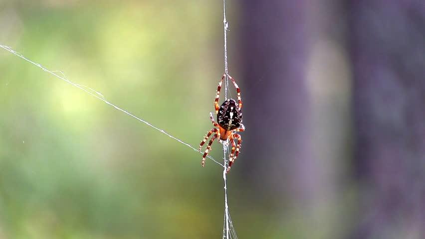 spider on web, close-up