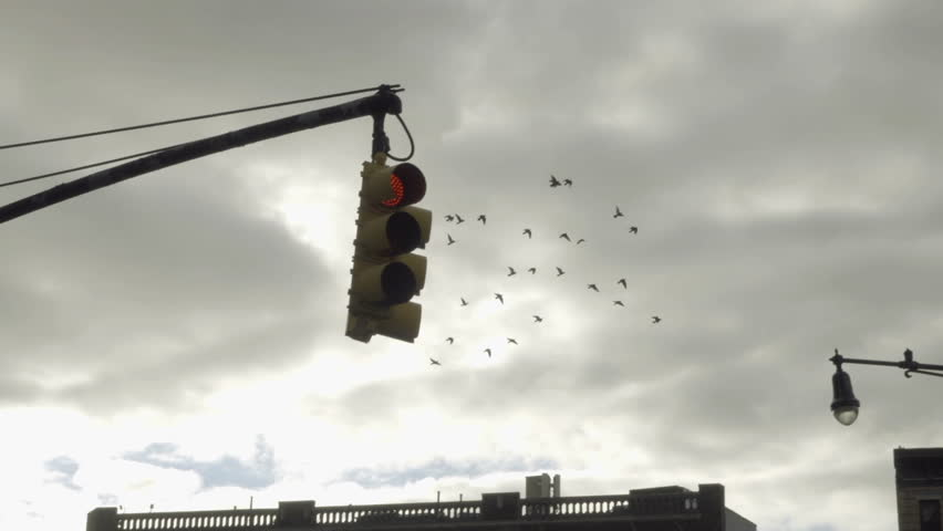 flock of pigeons flying around in the West Village slow motion - birds flapping wings free in sky in NYC 1080 HD