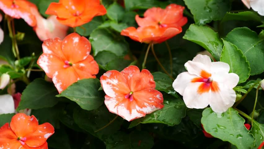 Colourful wildflowers in the garden.   Shutterstock HD Video #13935821
