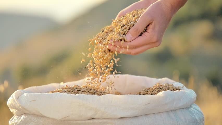 Image result for grains in hands