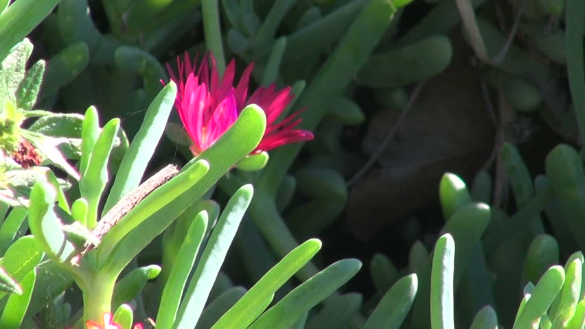 Header of ice plant