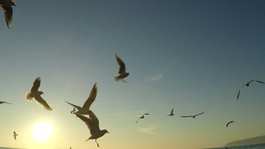 SLOW motion, Seagull Birds flying and fishing in the sea. Beautiful sunrise over the ocean, sun flare. | Shutterstock HD Video #14238431