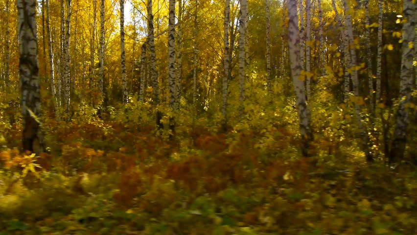 Camera moves down the road along the autumn forest.