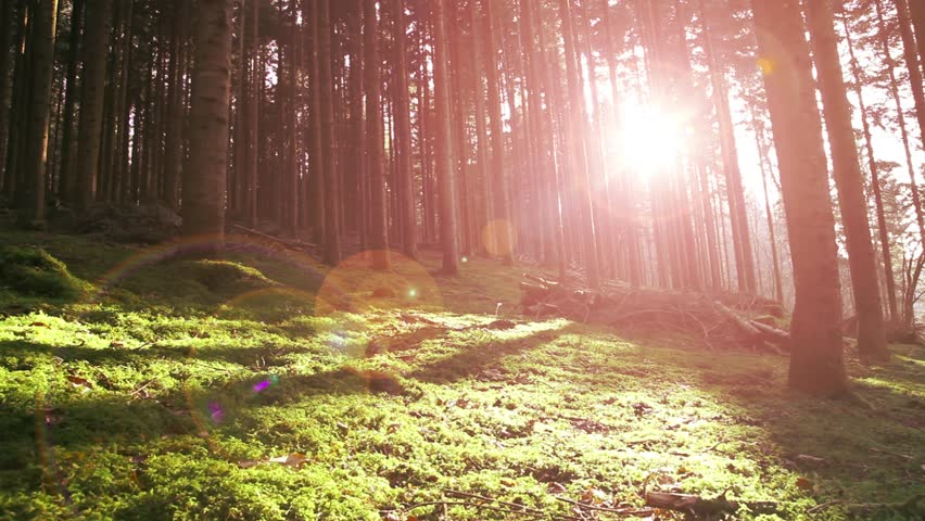 Magical morning mystic forest with green moss on the floor and lovely red color sun rays with flare. Right to left slowly slider dolly move.  | Shutterstock HD Video #14478961