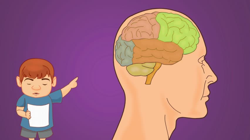 Brain Anatomy Study Vector Animation Stock Footage Video 14547025
