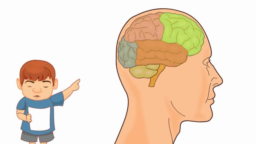 Brain Anatomy Study Vector Animation Stock Footage Video 14549728