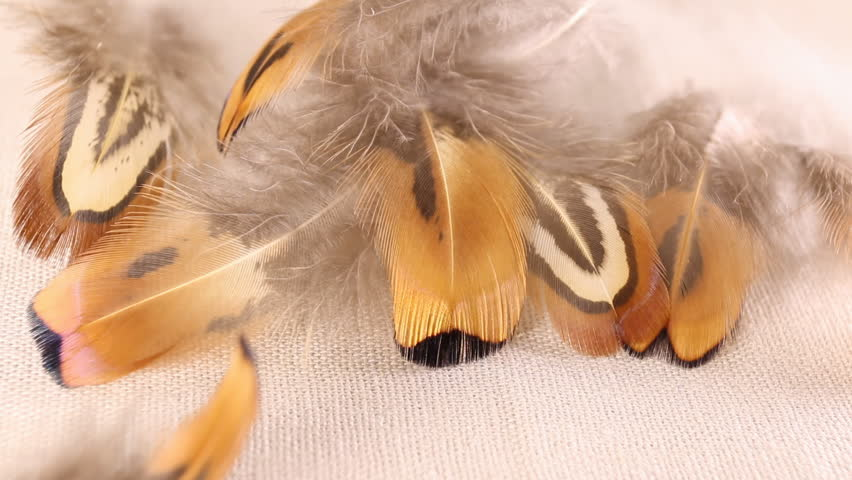 Parts of a colorful  feathers with moving details. Macro shot. | Shutterstock HD Video #14592451