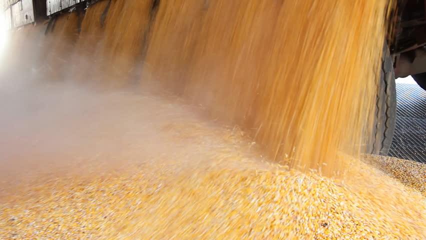 Loading Corn into the Silo   Shutterstock HD Video #1488121