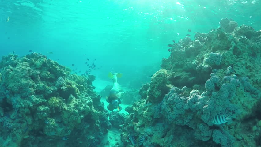 SLOW MOTION UNDERWATER: Young diver woman snorkeling and swimming underwater, exploring tropical reef with beautiful colorful exotic fish in crystal clear lagoon ocean in French Polynesia #14898511