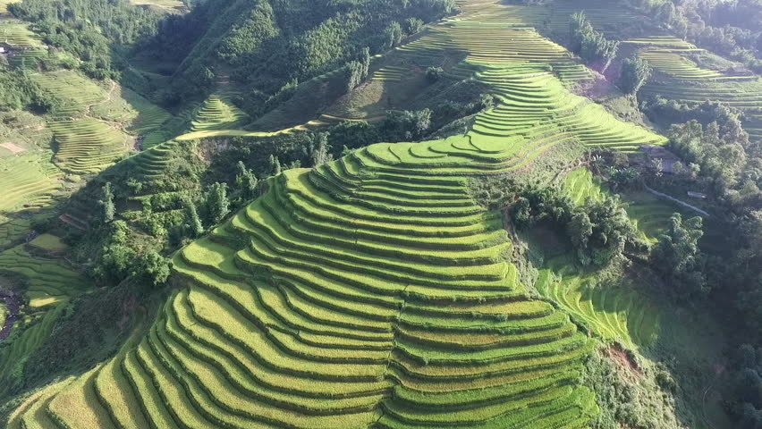 Aerial video in an amazing landscape, with drone, above rice terraces in a beautiful day. | Shutterstock HD Video #15050011