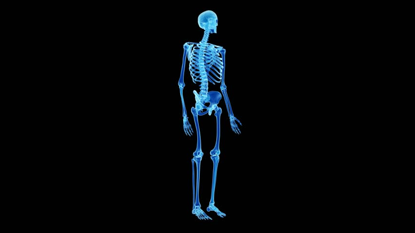 scanning human skeletal structure inside robot. bio technology, Skeleton