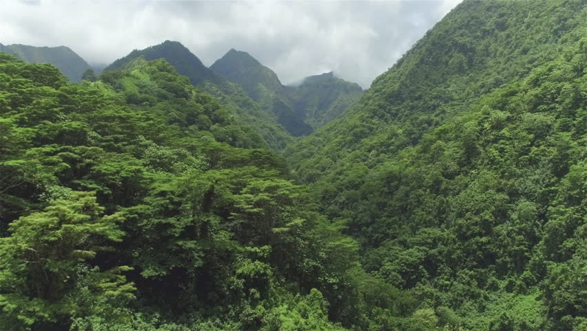 4K AERIAL: Flying above beautiful lush green jungle with palm trees and dense acacia trees growing on big mountains on tropical island in sunny summer #15133351