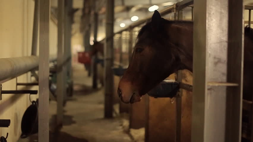 horses is staying in the stable #15325591