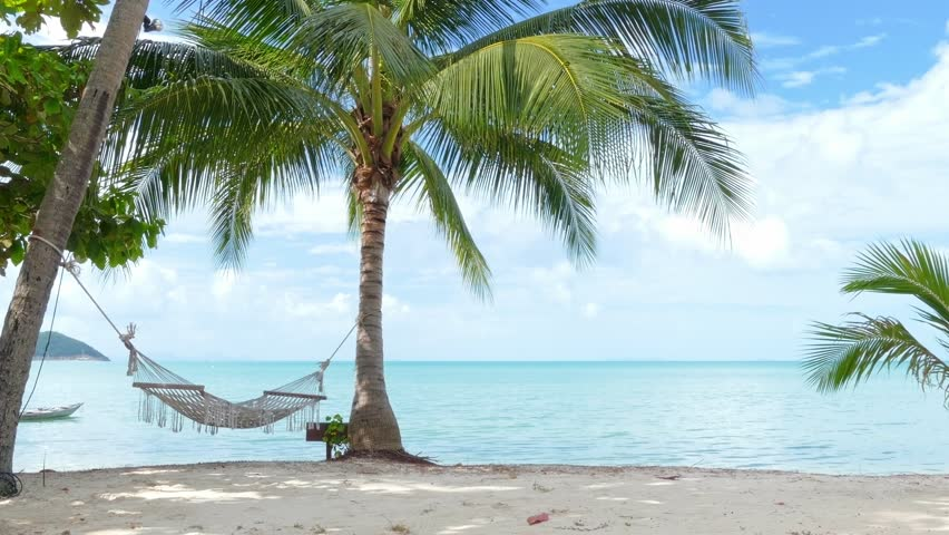 Hammock and palm trees on the beach