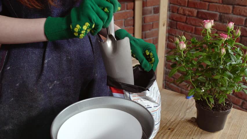 Beautiful redhead gardener planting roses   Shutterstock HD Video #15525091