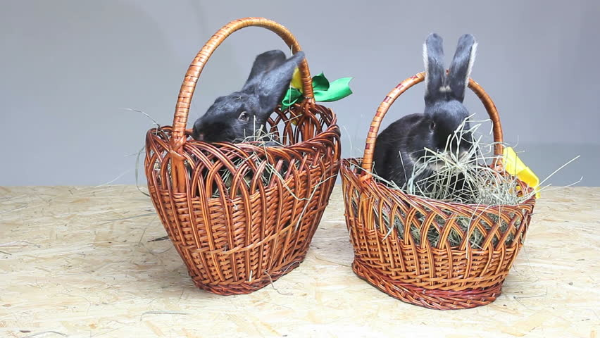 Easter bunny in an easter basket stock footage video 2191564 easter rabbits play near the basket and chewing hay hd stock video clip negle Gallery