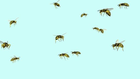 wasp swarm animation