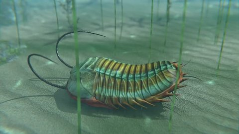 An animation of a Trilobite moving about on a Cambrian Period (400 million years ago) sea bottom. Trilobites are a well-known fossil group of extinct marine arthropods that form the class Trilobita.