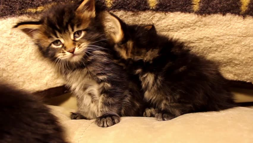 Cats Funny Video Clips
