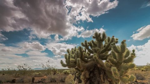 Beautiful clouds pass over the Arizona desert with a large cholla cactus in the foreground