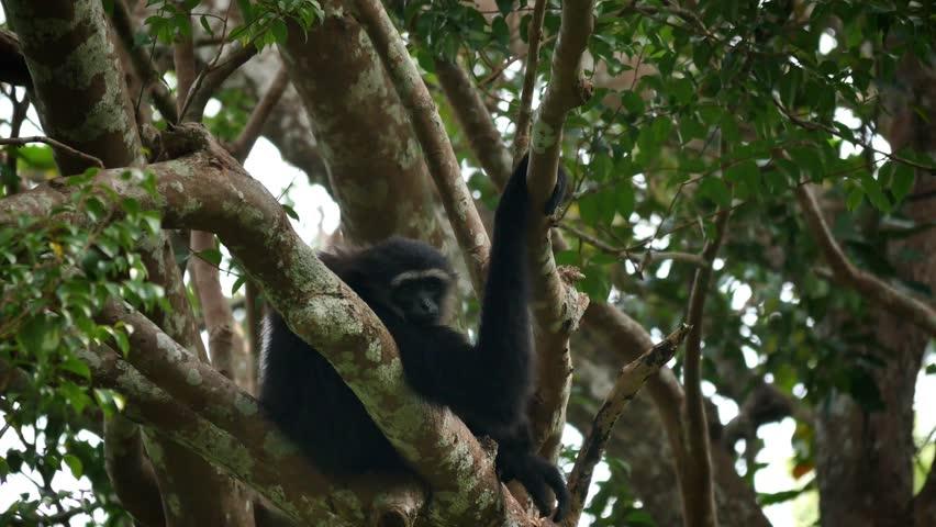 black-midget-hanging-on-tree-tranny-movies