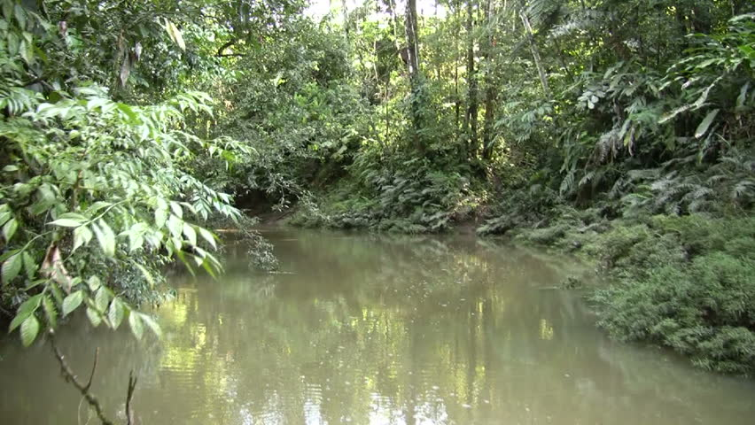 Drifting up an Amazonian creek. A tributary of the Rio Arajuno, Ecuador, shot from a canoe.