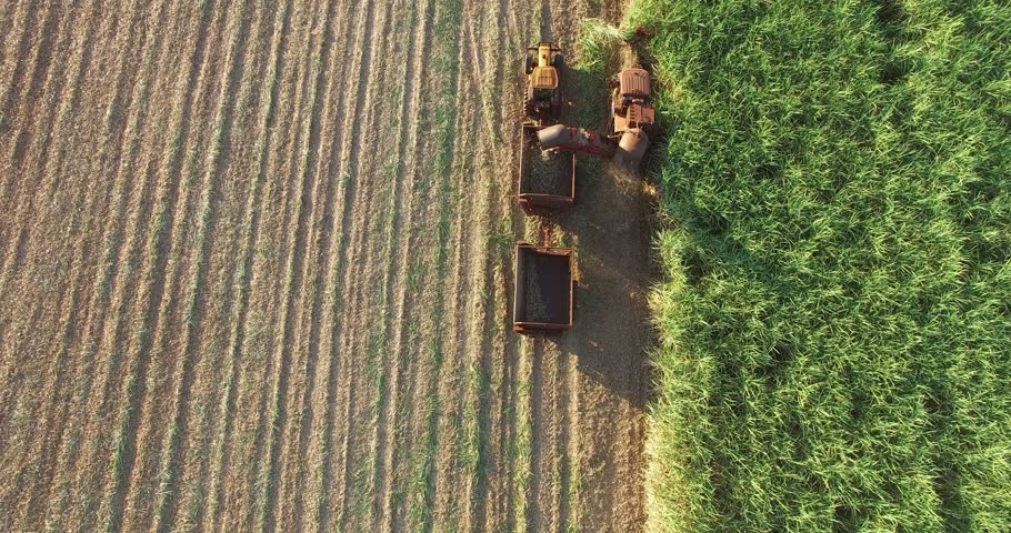 Sugar Cane - Sugar Cane - Mechanical harvesting of sugarcane in a late afternoon in Brazil - Top view