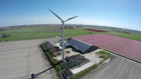 Aerial close by farm near colorful pink tulip field also showing wind turbine and farm shed with solar panel roof providing renewable energy to homes polder landscape springtime blue sky background 4k