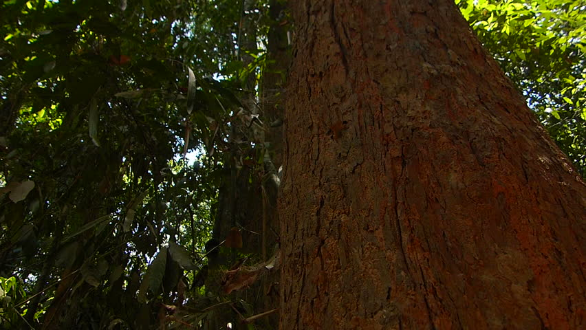 Tropical Forest | Shutterstock HD Video #16641181