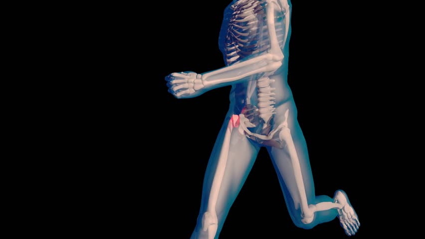medical 3d animation of the human muscle system stock footage, Muscles