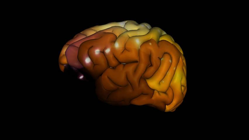 the human brain, alpha channel