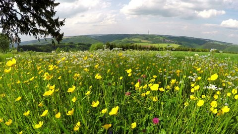 Meadow on the Luxembourg countryside in spring day. Panorama of northern Luxembourg, 4K
