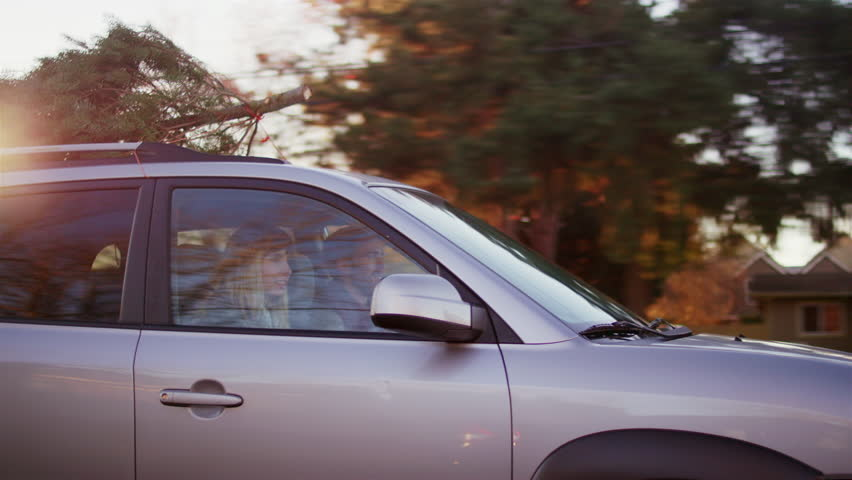 Young Man And Woman Driving With A Christmas Tree On Top Of Their  - Christmas Tree On Car