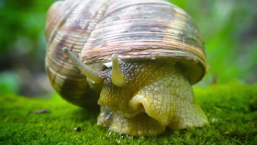 cautious snail closes from danger