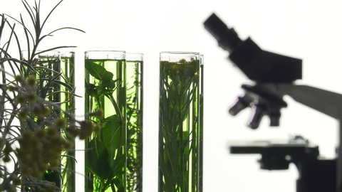 chives, dill, thyme, basil,  curry and mint in turning test tubes/curry flower in the foreground, in the background microscope