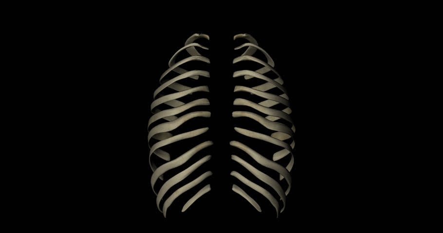 animation of bone structure of sternum and ribs in thorax of a, Skeleton