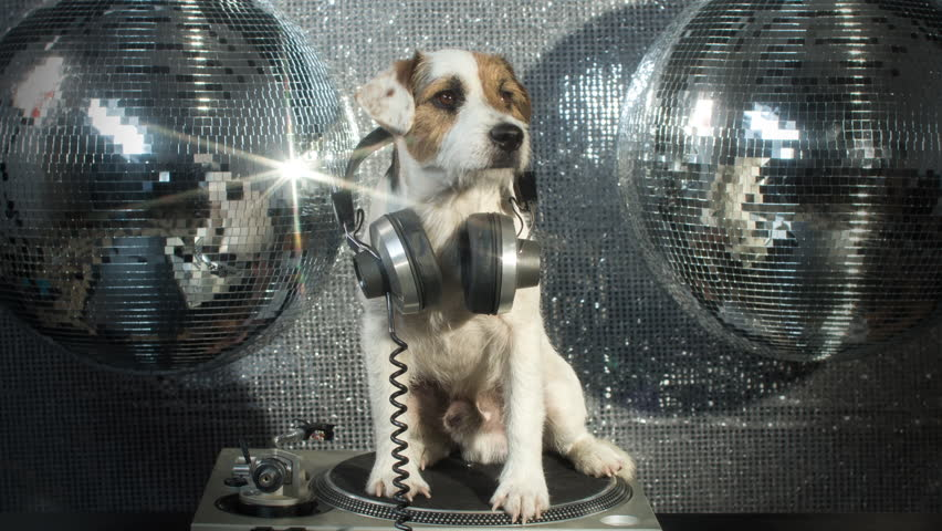 Dj dog is in the house! an adorable jack russell dog in a club and disco situation | Shutterstock HD Video #17565451