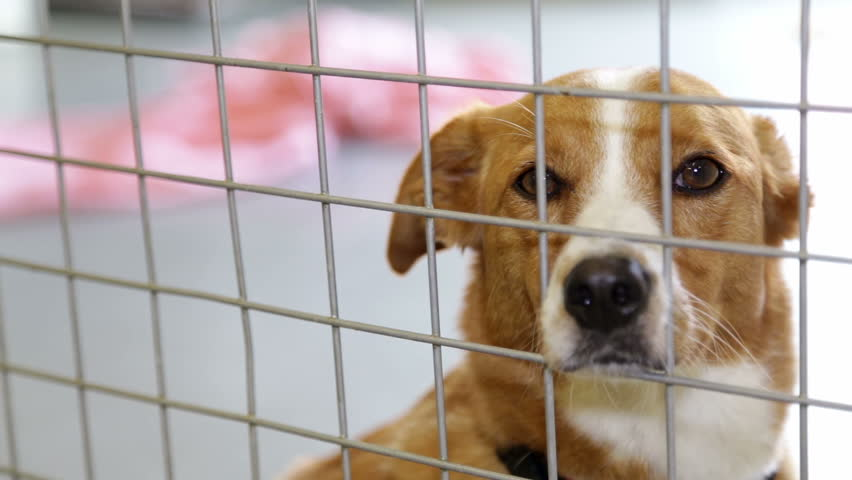Sad Dog In Kennel   www.pixshark.com - Images Galleries ...