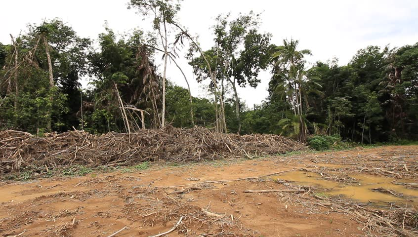 environmentalism and deforestation activities The growing level of  a recent piece in the new york times on deforestation provides one  about 72 percent said they reduced their outdoor activities.