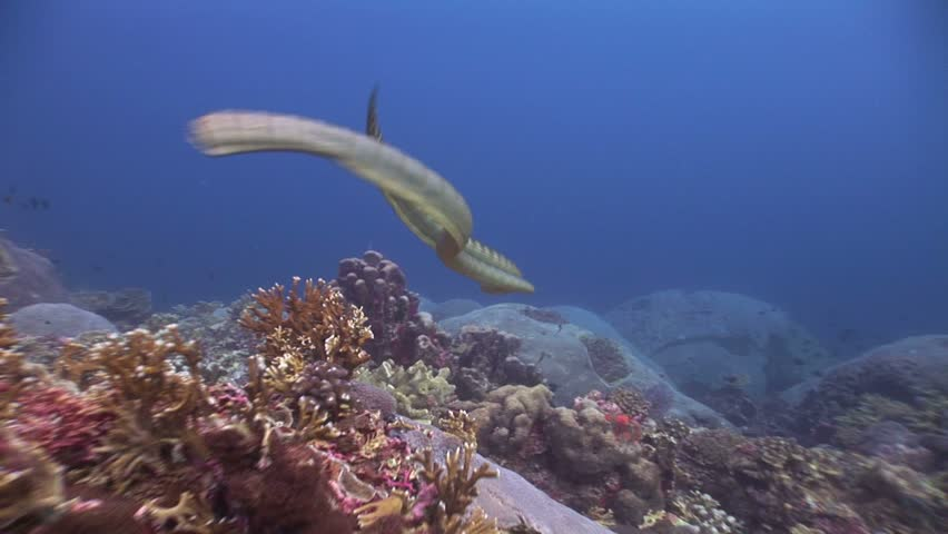 Two sea snakes #1766921