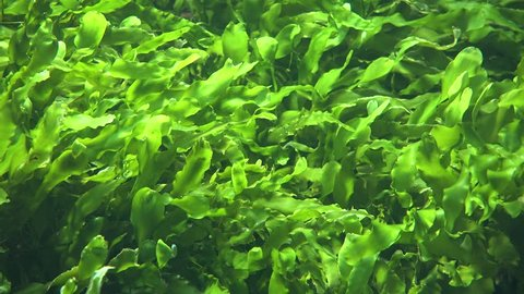 Seaweed And Sea Algae