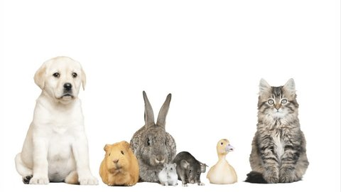 adorable pets on a white background