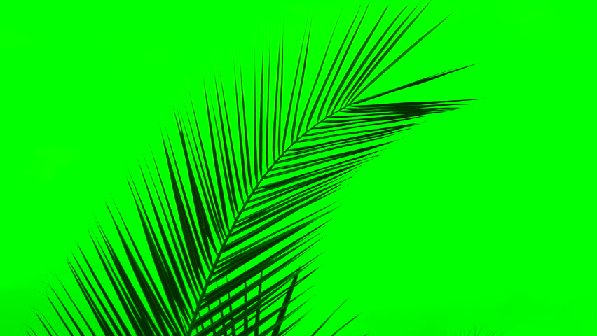 Isolated palm leaf sways against green background. 1080p