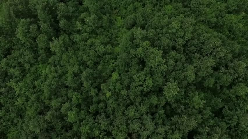 Aerial view of the woods. Flight over the trees . Flying over the top of trees .Flight over green forest. Serbia | Shutterstock HD Video #18074251