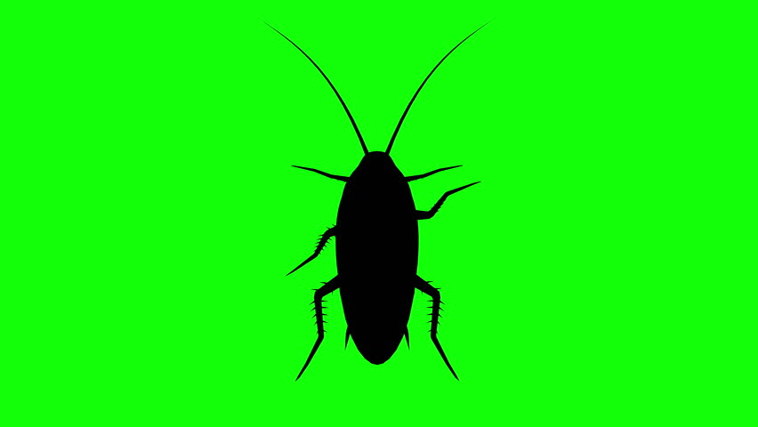 Fixed Cockroach on green screen, CG animated silhouette, looping