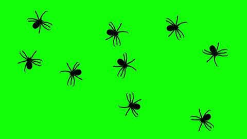 Swarm of spiders, CG animated silhouettes on green screen, seamless loop