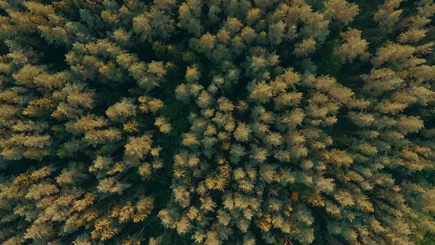 Aerial drone shot over the north european forest - fly down