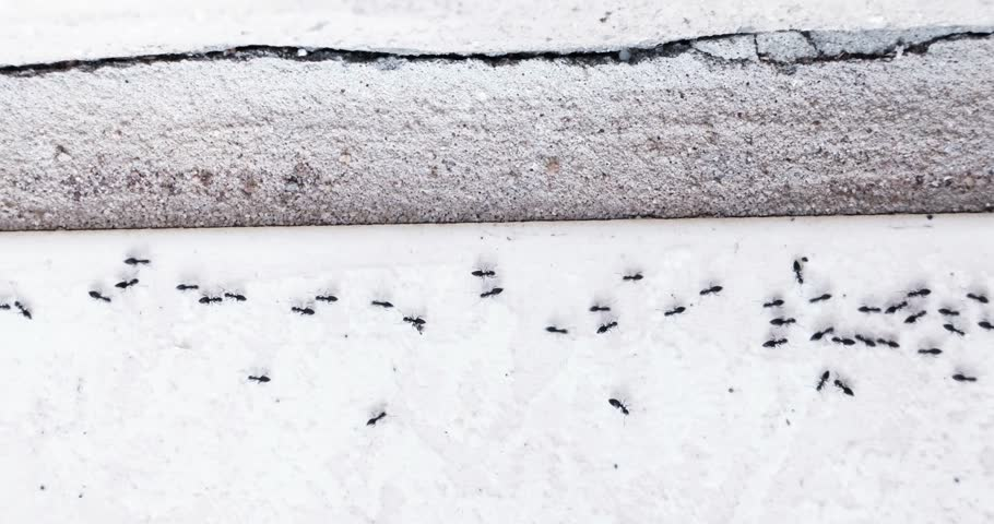 ants entering house keeping line