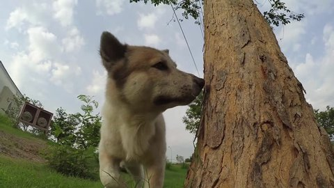 A dog lifts up his leg and pee side the tree