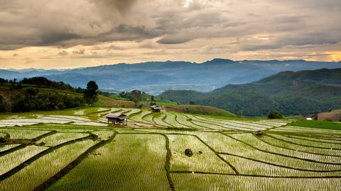 Movement of clouds over the Rice fields on terraced in rainny season at Pa Pong Pieng, Mae Chaem, Chiang Mai, Thailand